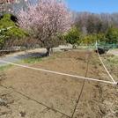 わくわくビレッジの畑に苗の植え付けをしました♪