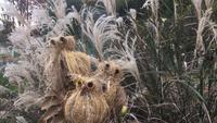ススキのフクロウ作り【高尾の森自然学校】